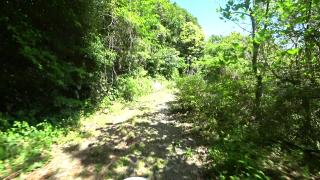 照葉樹の森、大鹿倉林道、大中尾林道